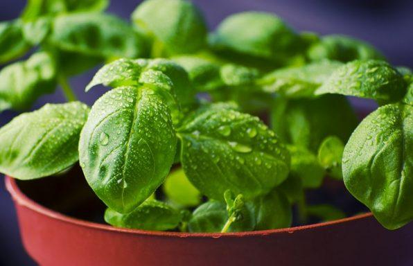 9 ירקות ותבלינים בריאים שניתן לגדל בכל בית