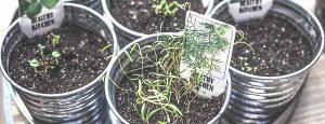 לא רק בגינה: 7 דרכים מדליקות לגדל עשבי תיבול בבית