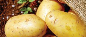 רק בריאות: 10 המאכלים הבריאים ביותר בעולם