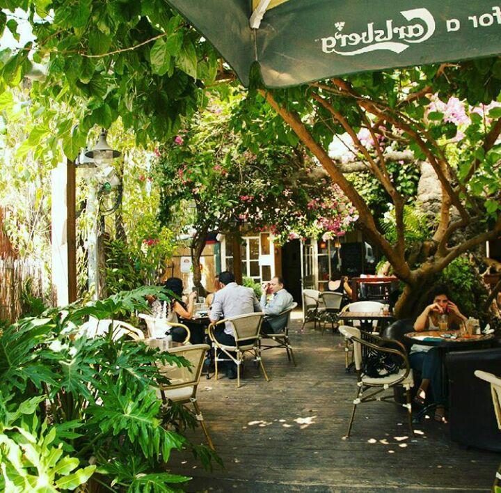 החצר המקסימה - מסעדת עץ התות