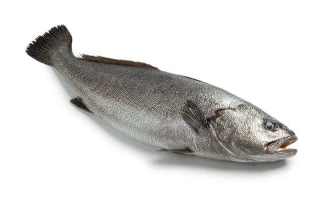 דג מוסר