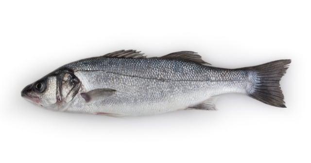 דג לברק