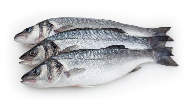 דג בס