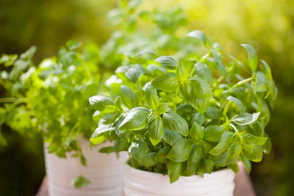 עשבי תיבול | תמונה: shutterstock