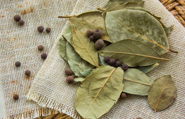 עלי דפנה – ערכים תזונתיים, טיפים ומתכונים